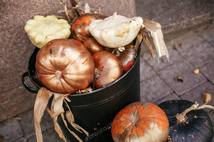 Halloween street decor. Stylish golden pumpkins and squash in city street, holiday decorations