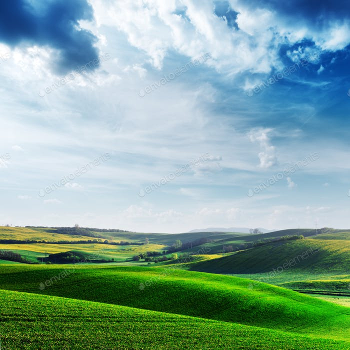 Picturesque rural landscape with green field and tree