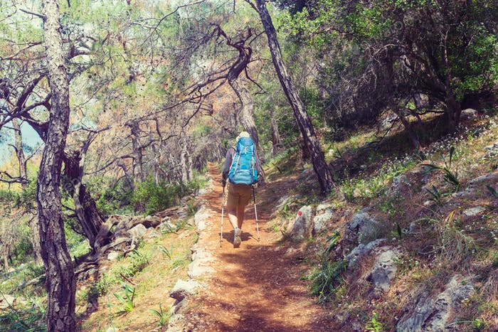 Caminata en el Bosque