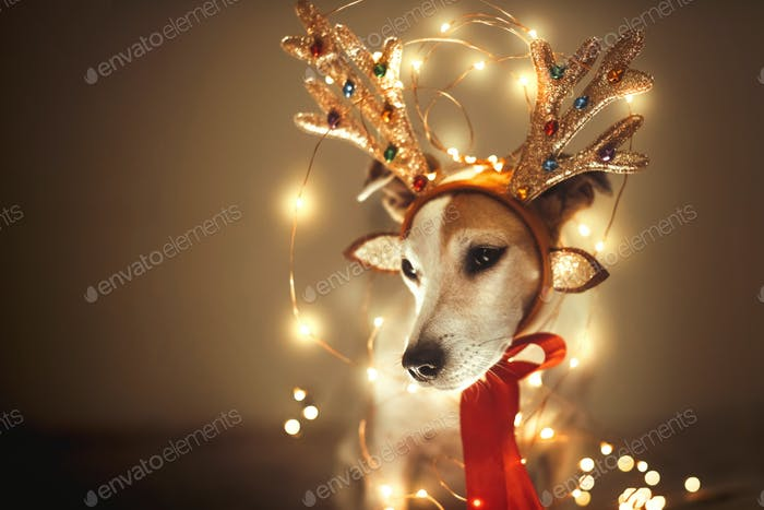 Funny dog in deer costume with antlers, sparkling garland, masquerade