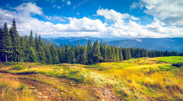 Pine trees in mountains