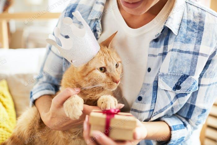 Present for Cat