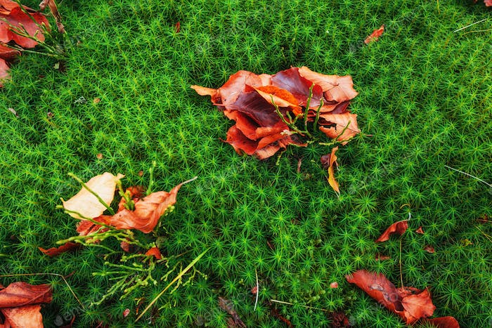 red maple leaf on green moss ground