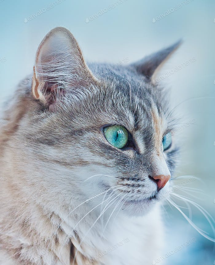 Close-up portrait of a kitten with big green eyes