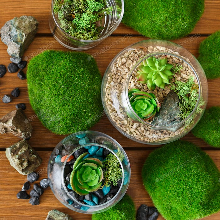 florariums and moss stones on table