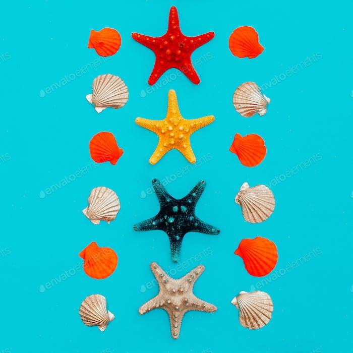 set of sea stars and seashells. Beach style. Minimal art