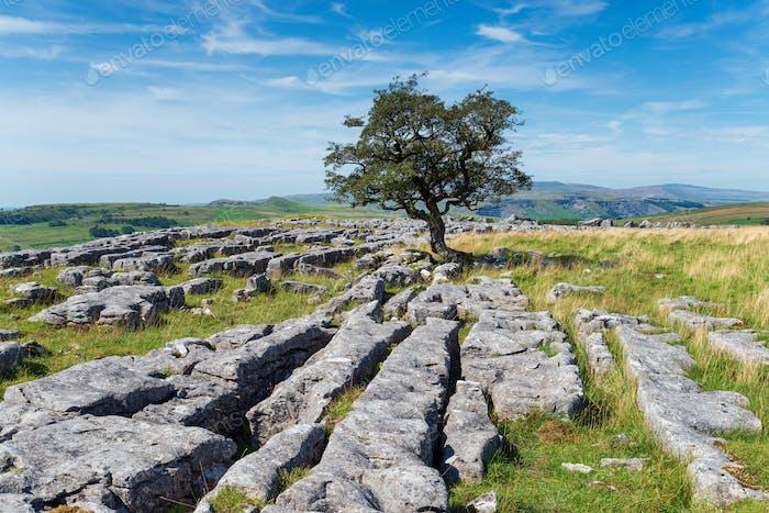 Limestone pavements at the Winskill Stones near Settle