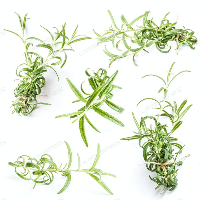 Rosemary twigs