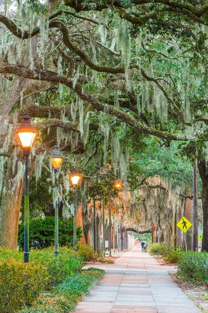 Savannah, Georgia, USA tree lined sidewalks