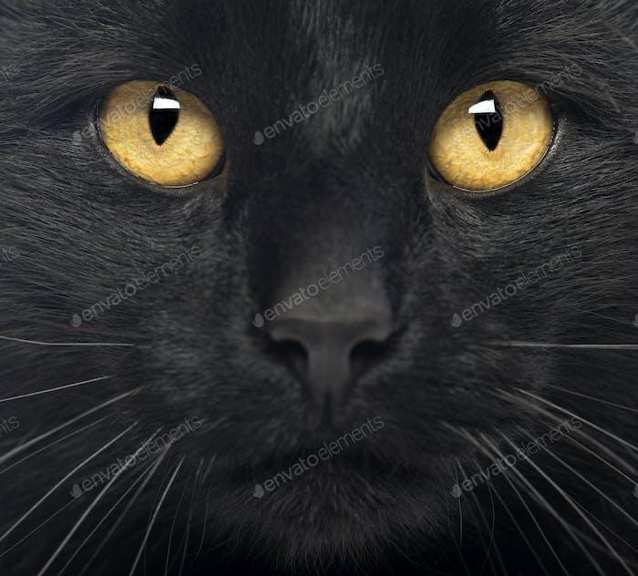 Nahaufnahme einer schwarzen Katze