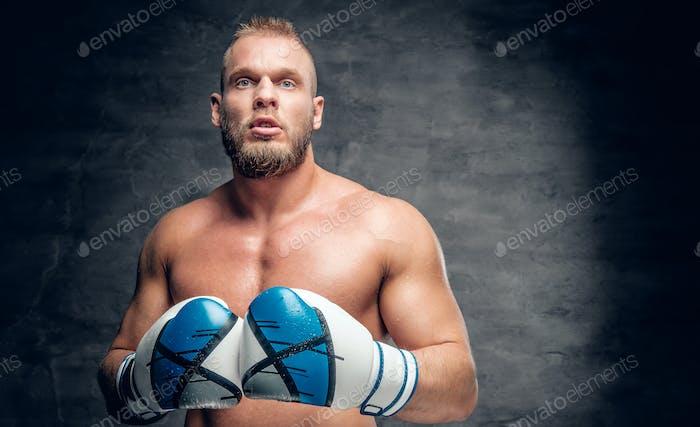 Puncher in a boxer gloves over grey vignette background.
