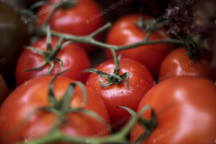 Closeup of fresh organic tomatoes