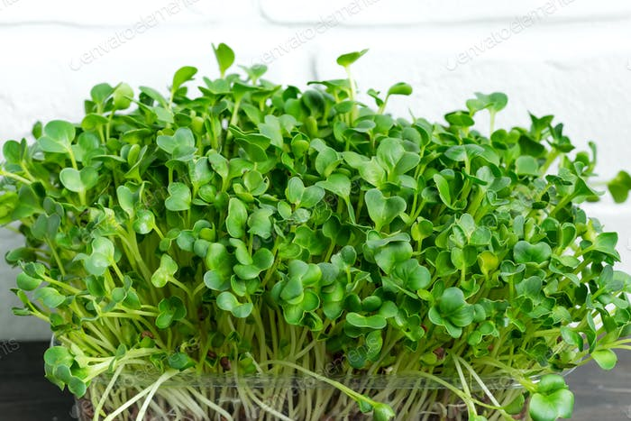 Natural organic microgreen in a transparent box on a wooden table against white brick wall