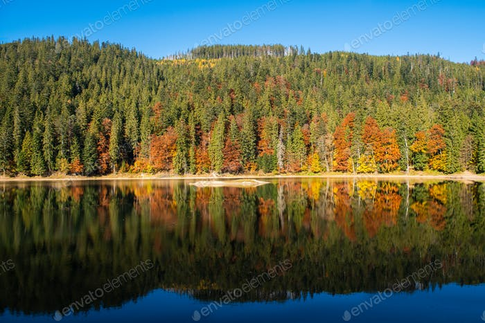 Perfect autumn tree reflections in lake