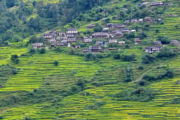 Mountain village and rice fields in the Himalayas, Nepal