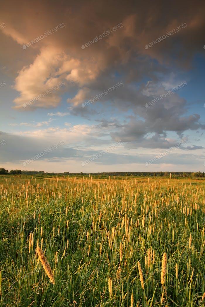 Summer field on the sunset