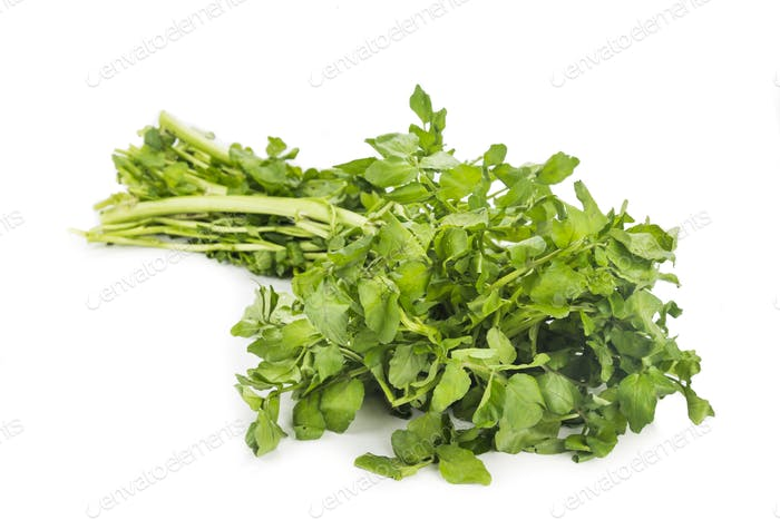 Bundle of freshly harvested watercress rich in vitamin and nitra