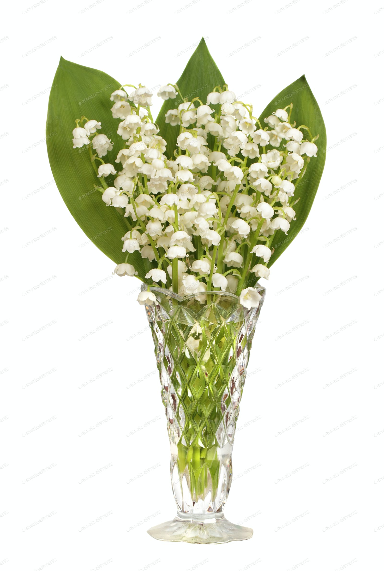 Lily of the valley photo by michalex on envato elements izmirmasajfo
