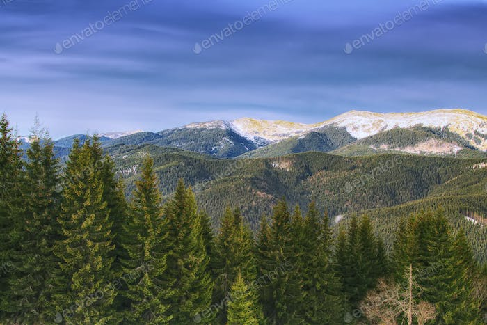 Spring mountain landscape with snowcapped montaines and fir fore