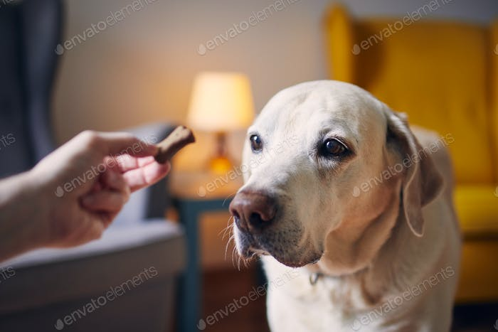 Dog watching treat from his pet owner