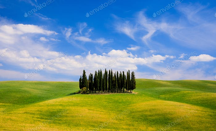 Rolling hills, green fields and cypresses trees in Tuscany, Italy