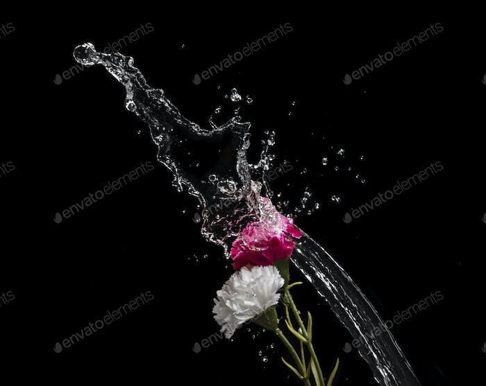 FLOWER WATER SPLASH