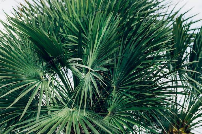 Palmen, Sommerhintergrund