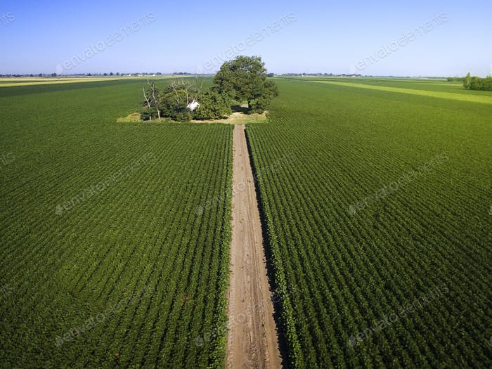 Agricultural Soy Fields