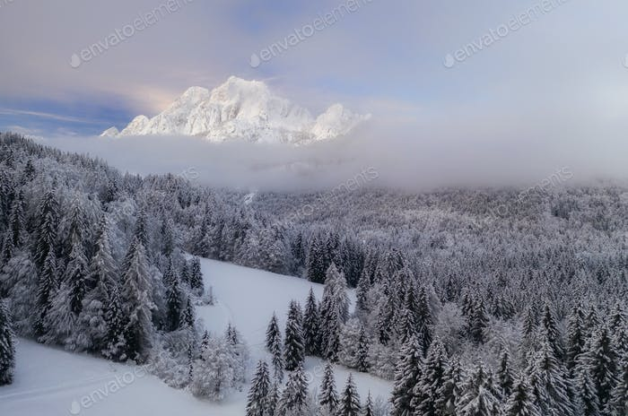 Flying over a winter forest