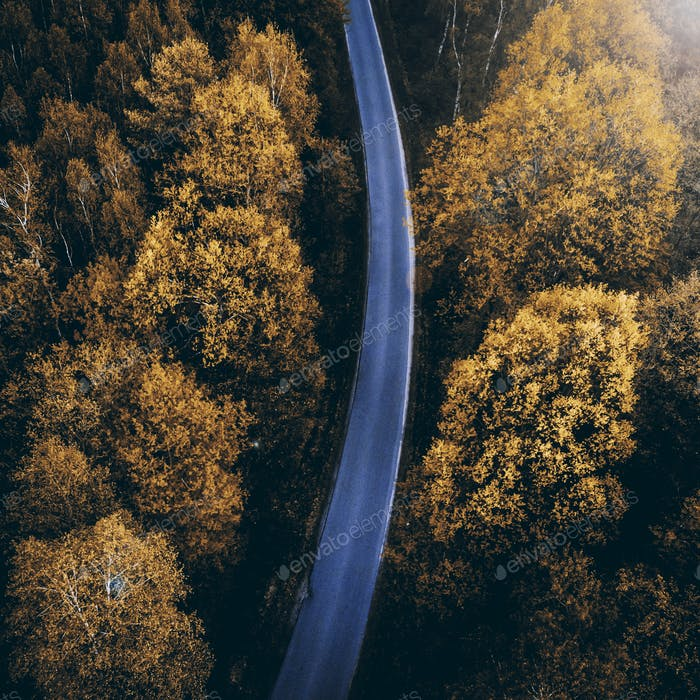 Autumn colors in coniferous forest, top down drone view