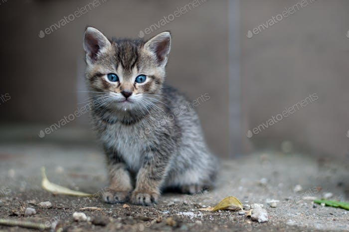 young kitty