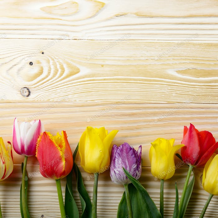 Colorful tulip flowers on wooden table background with space for