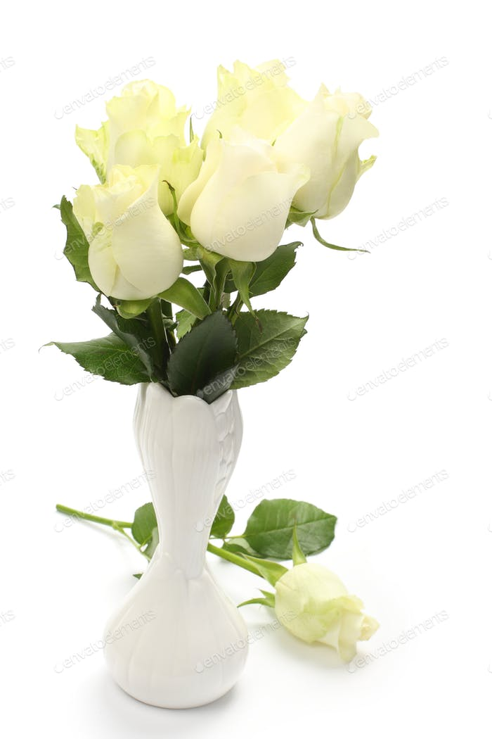 Bouquet of white roses in vase on white background
