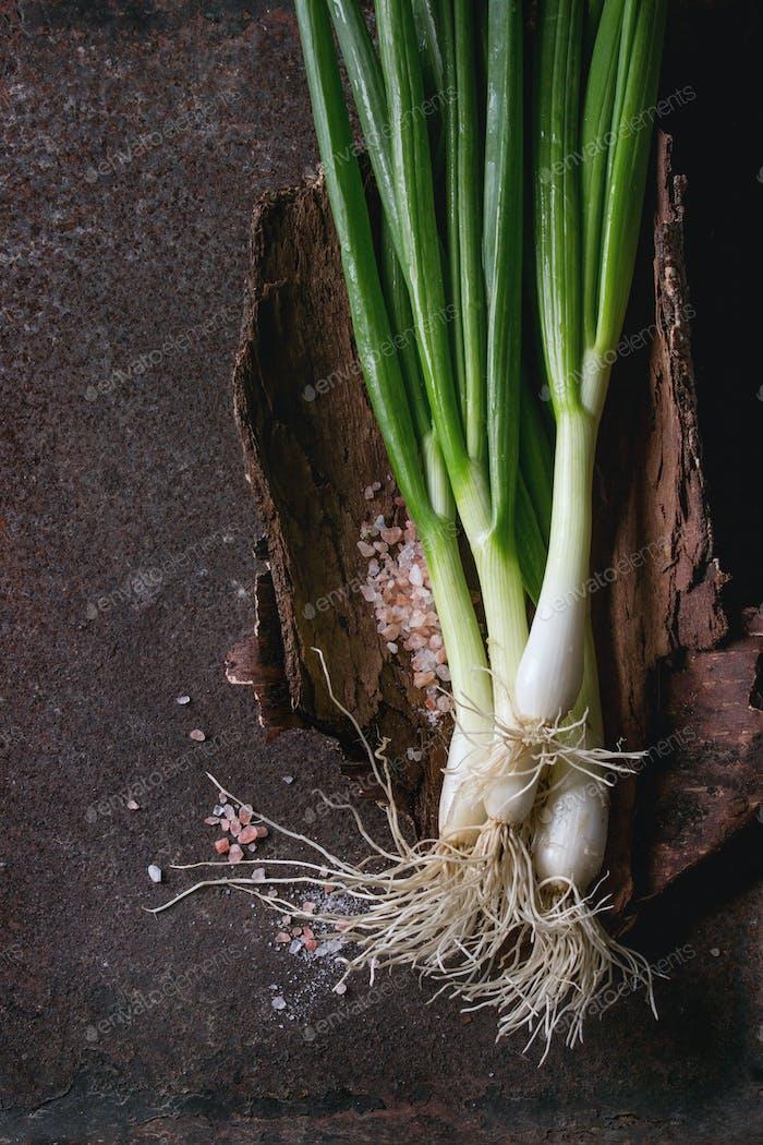 Fresh spring onion bundle