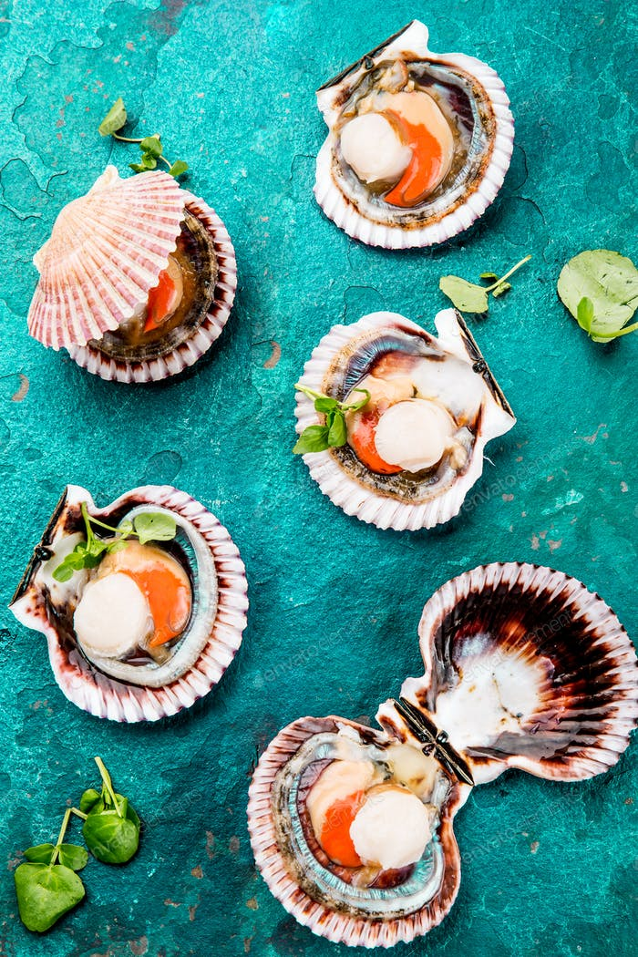 Raw opened shellfish scallops on turquoise background. Top view. Seafood concept