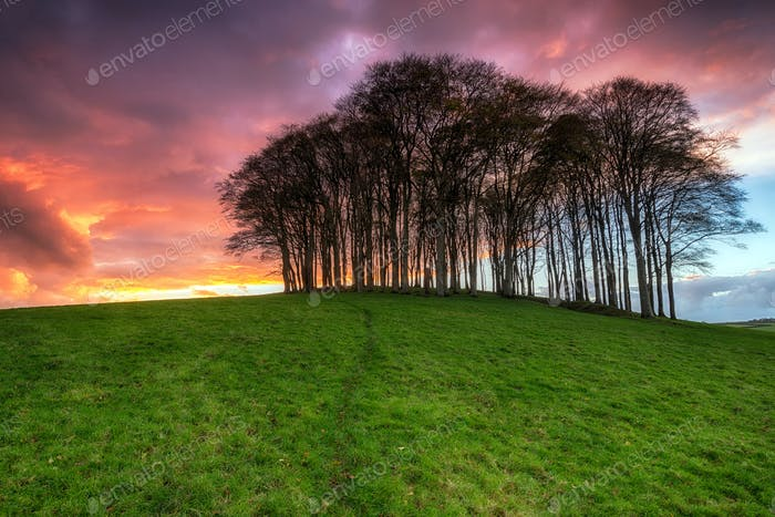 Sonnenuntergang über Bäumen