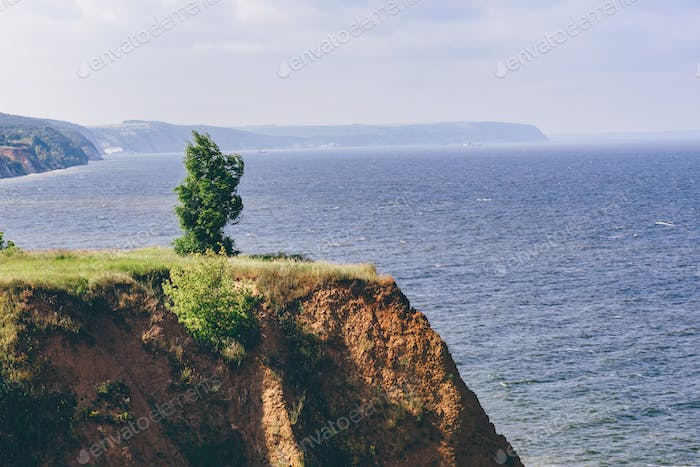 Lonely tree on cliff