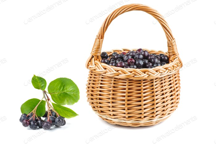 Wicker basket with chokeberries isolated on white background