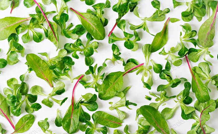Salad leaves Valerianella on white background. View from above.