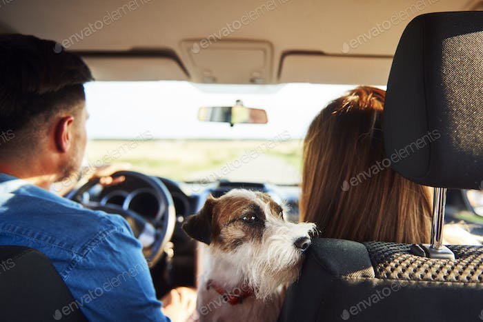 Rear view of young couple and dog in a car