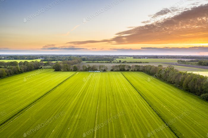 Luftaufnahme der landwirtschaftlich genutzten Wiesenlandschaft