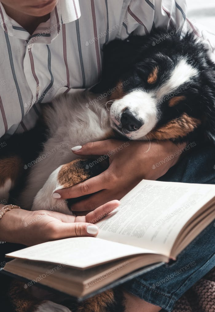 woman and dog lifestyle image. Bernese Mountain Dog is sleeping in his arms