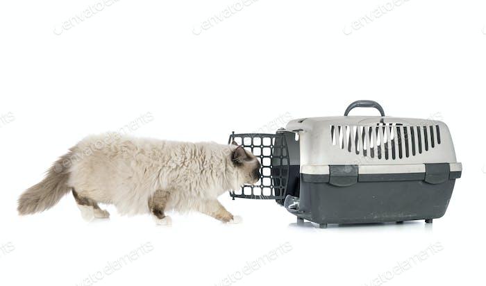 birman cat and cage