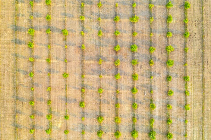 Aerial photography,