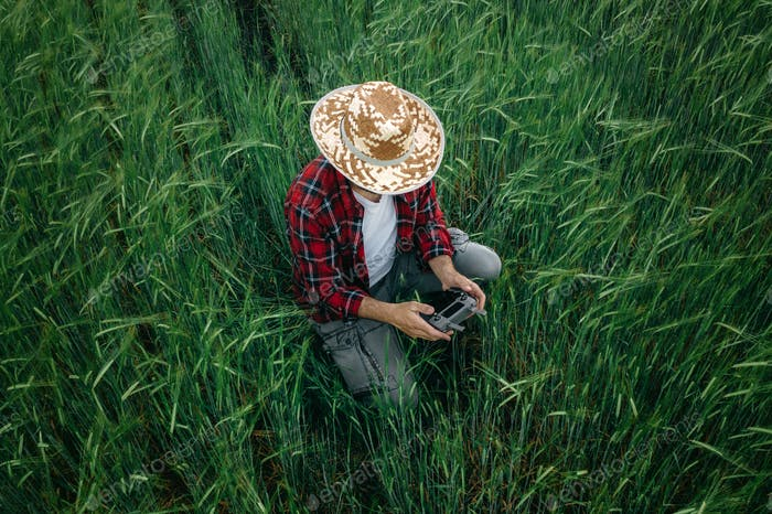 Aerial view of barley farmer using drone remote controller