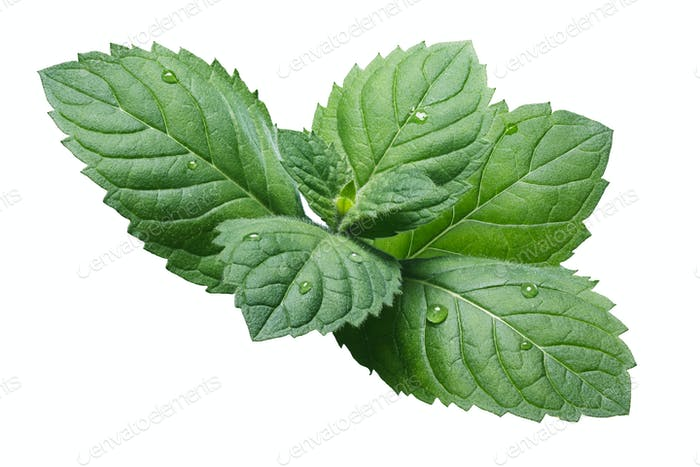 Fresh peppermint leaves (Mentha Piperita)