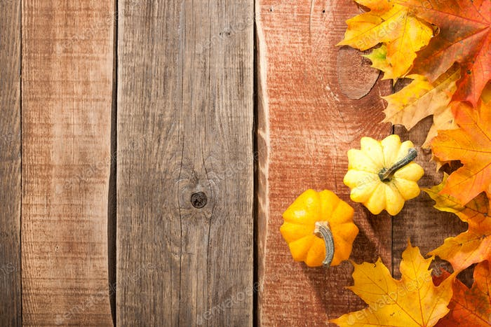 Thanksgiving background with pumpkins and maple leaves