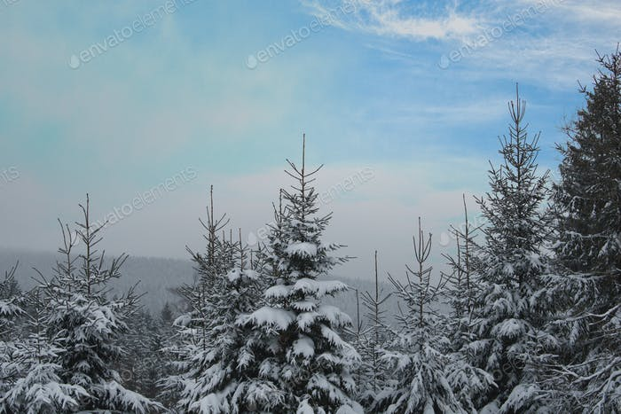 Snowy landscape with tree tops