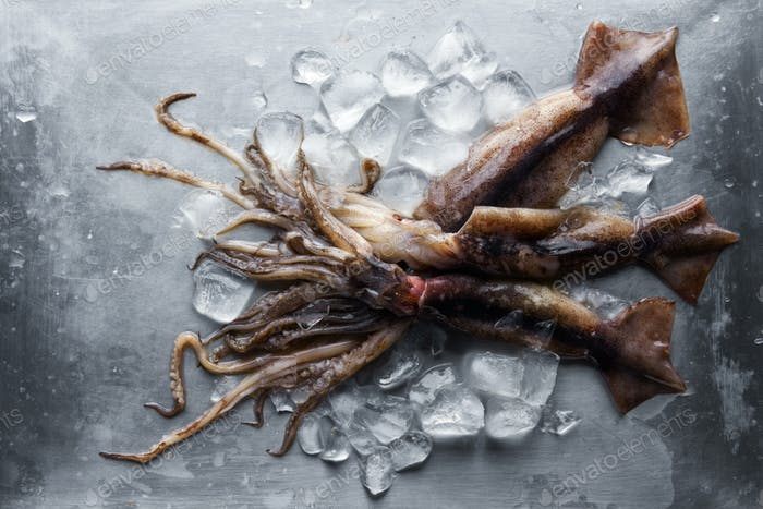 Raw squid with ice cubes on steel plate