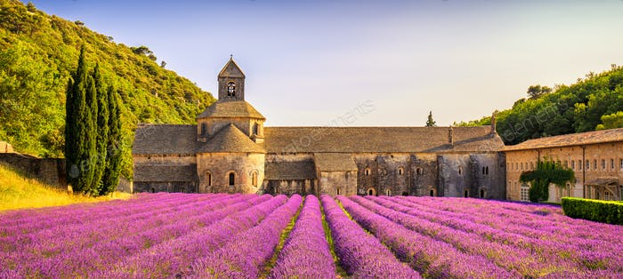 Abbey of Senanque blooming lavender flowers panorama at sunset.